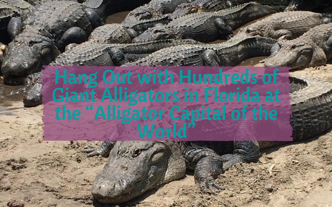 "Hang Out with Hundreds of Giant Alligators in Florida at the ""Alligator Capital of the World"""